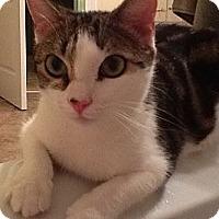 Adopt A Pet :: Joshua - Monroe, GA