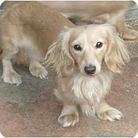 Adopt A Pet :: Nigel - San Jose, CA