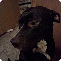 Adopt A Pet :: Zeuss CP - Dayton, OH