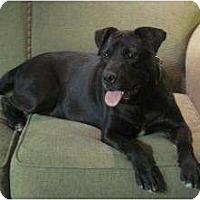 Adopt A Pet :: Bam Bam - Allentown, PA