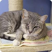 Adopt A Pet :: Nausicaa - Chicago, IL