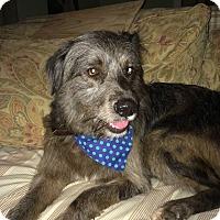 Adopt A Pet :: Charming Charlie - Brooklyn, NY