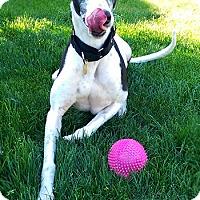 Adopt A Pet :: Hilton - Seattle, WA