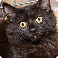 Adopt A Pet :: Jaina - Irvine, CA