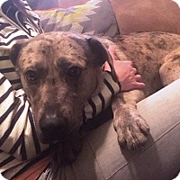 Adopt A Pet :: Sharkie - Richmond, VA