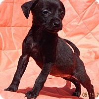 Adopt A Pet :: Gemini (3 lb) - SUSSEX, NJ