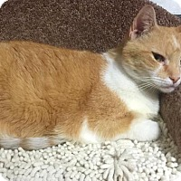 Adopt A Pet :: Nikki - Leonardtown, MD