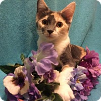 Adopt A Pet :: Lacey - Chattanooga, TN