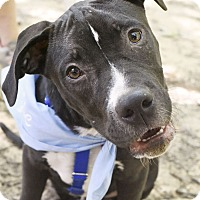 Adopt A Pet :: Yoshi - Knoxville, TN