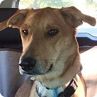 Adopt A Pet :: Maxine - Kansas City, MO