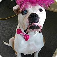 Adopt A Pet :: Roz - Garden City, MI
