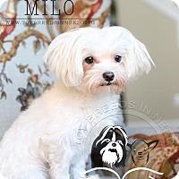 Adopt A Pet :: Milo - Frederick, MD