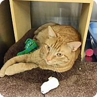 Adopt A Pet :: Otis Redding-Adoption Pending! - Colmar, PA