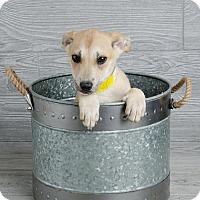 Adopt A Pet :: Dayna - Denver, CO