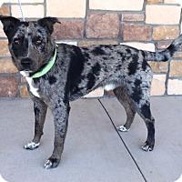 Adopt A Pet :: Dexter - Artesia, NM