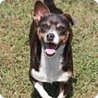 Adopt A Pet :: Silver(200$ Happy Homing-days - Brattleboro, VT