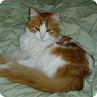 Adopt A Pet :: Basil - Hastings, NY