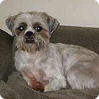 Adopt A Pet :: Teddy - South Amboy, NJ