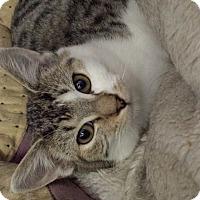 Adopt A Pet :: Donatella Versace - Richboro, PA