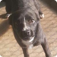 Adopt A Pet :: Keegan - Pembroke, GA