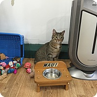 Adopt A Pet :: Kaitlyn - Speonk, NY