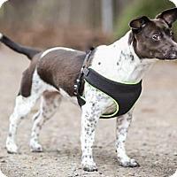 Adopt A Pet :: Lucy - Yelm, WA