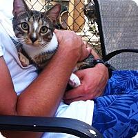 Adopt A Pet :: Bolek - Brooklyn, NY