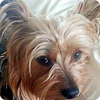 Adopt A Pet :: Abby - Canton, IL