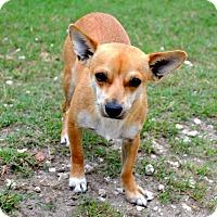 Adopt A Pet :: Cody - Tavares, FL