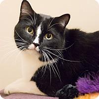 Adopt A Pet :: Lewis - Chicago, IL