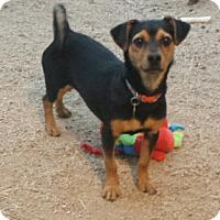 Adopt A Pet :: Kiali - Scottsdale, AZ