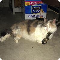Adopt A Pet :: Tweety - Columbus, OH