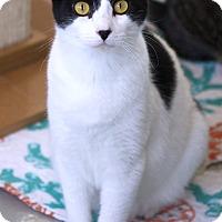 Adopt A Pet :: Ezra - St Louis, MO