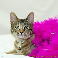 Adopt A Pet :: Princess - Little Rock, AR