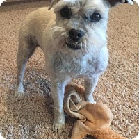 Adopt A Pet :: Penny - Spanish Fork, UT