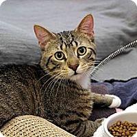 Adopt A Pet :: Whitman - Chicago, IL