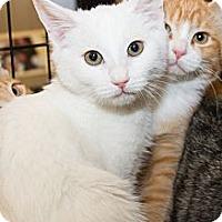 Adopt A Pet :: Deryn - Irvine, CA