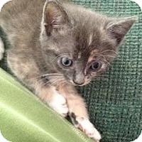 Adopt A Pet :: Puddin - Winter Haven, FL