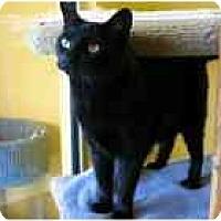 Adopt A Pet :: Bubba Ray - Marietta, GA