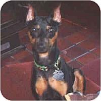 Adopt A Pet :: COALTRAIN - Springvale, ME