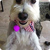 Adopt A Pet :: MICKEY - Mission Viejo, CA