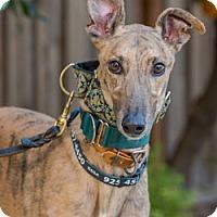 Adopt A Pet :: Westcoast - Walnut Creek, CA