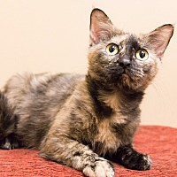Adopt A Pet :: Theodora - Chicago, IL