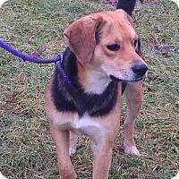 Adopt A Pet :: Danny - Metamora, IN