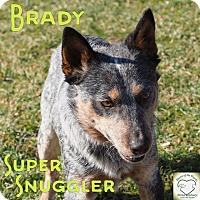 Cattle Dog Mix Dog for adoption in Washburn, Missouri - Brady