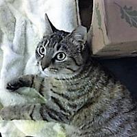 Adopt A Pet :: Deja Vu - Medina, OH