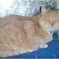 Adopt A Pet :: Florence - Pasadena, CA