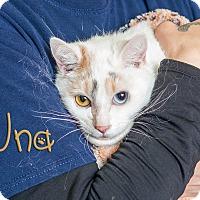 Adopt A Pet :: Una - Somerset, PA