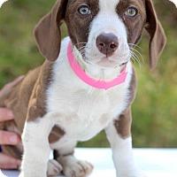 Adopt A Pet :: Japan - Waldorf, MD