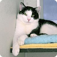 Adopt A Pet :: Panda - Stamford, CT